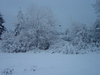 Snowday_november_26_2006_092